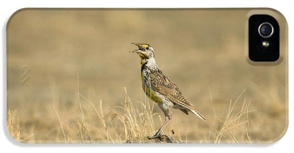 A Juvenile Western Meadowlark IPhone 5 Case