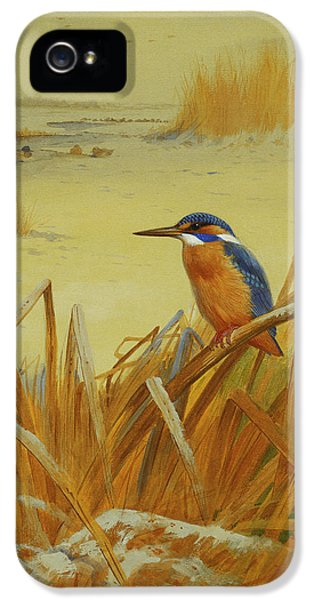 A Kingfisher Amongst Reeds In Winter IPhone 5 Case