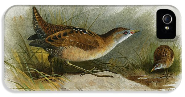 A Little Crake IPhone 5 / 5s Case by Archibald Thorburn