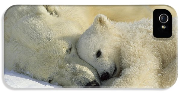 A Polar Bear And Her Cub Napping IPhone 5 Case