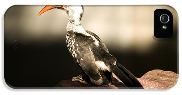 A Red-billed Hornbill At The Lincoln IPhone 5 Case