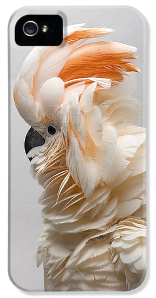 A Salmon-crested Cockatoo IPhone 5 Case