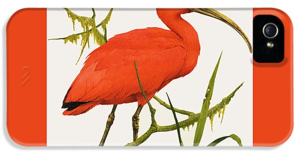 A Scarlet Ibis From South America IPhone 5 Case by Kenneth Lilly