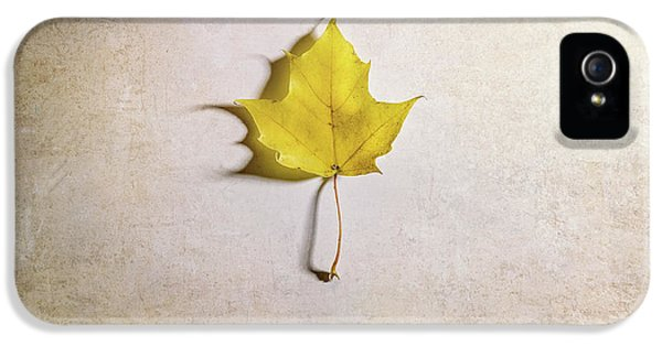 A Single Yellow Maple Leaf IPhone 5 Case by Scott Norris