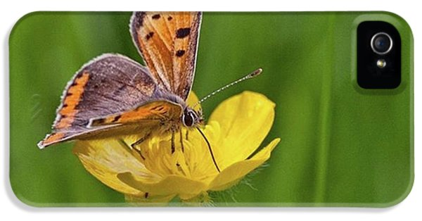 iPhone 5 Case - A Small Copper Butterfly (lycaena by John Edwards
