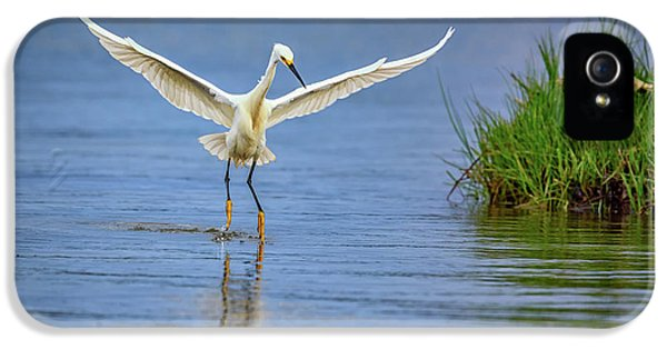 A Snowy Egret Dip-fishing IPhone 5 Case