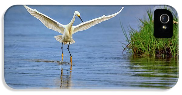 A Snowy Egret Dip-fishing IPhone 5 / 5s Case by Rick Berk