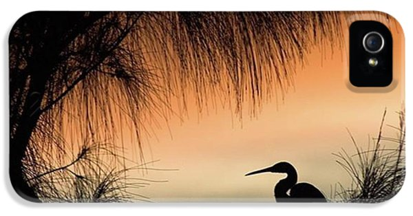 iPhone 5 Case - A Snowy Egret (egretta Thula) Settling by John Edwards