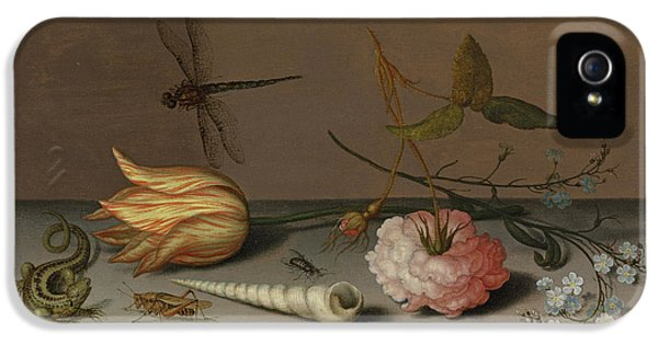 A Tulip, A Carnation, Spray Of Forget-me-nots, With A Shell, A Lizard And A Grasshopper, On A Ledge IPhone 5 Case by Balthasar van der Ast