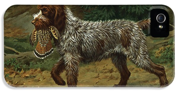 A Wire-haired Pointing Griffon Holds IPhone 5 Case