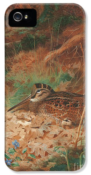 A Woodcock And Chick In Undergrowth IPhone 5 Case by Archibald Thorburn