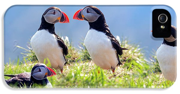 A World Of Puffins IPhone 5 Case