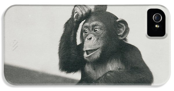 A Young Chimpanzee Playing With A Brush IPhone 5 Case