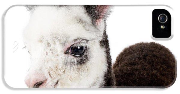 Llama iPhone 5 Case - Adorable Baby Alpaca Cuteness by TC Morgan