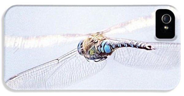 iPhone 5 Case - Aeshna Juncea - Common Hawker In by John Edwards