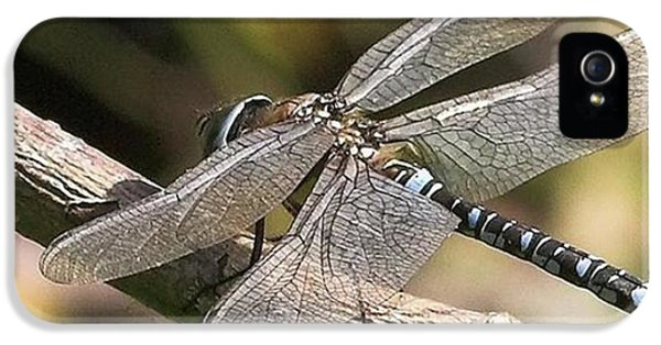 Aeshna Juncea - Common Hawker Taken At IPhone 5 Case by John Edwards