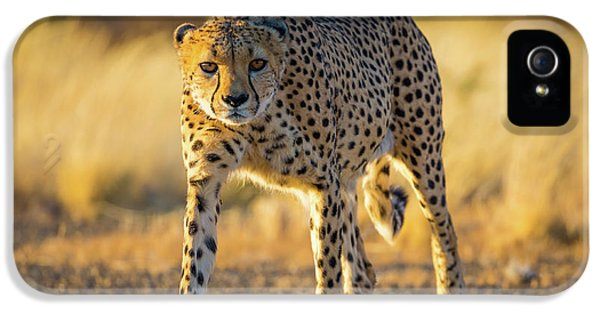 African Cheetah IPhone 5 Case