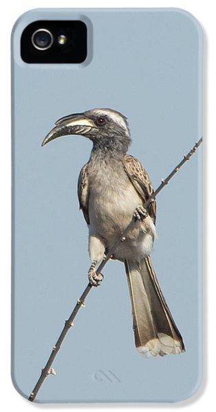 Hornbill iPhone 5 Case - African Grey Hornbill Tockus Nasutus by Panoramic Images