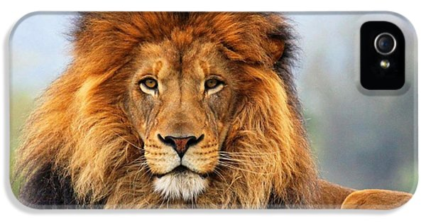 African Lion 1 IPhone 5 Case