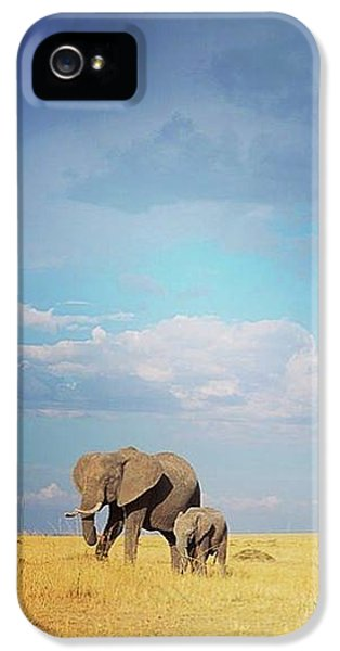 African Perfection IPhone 5 Case by Happy Home Artistry