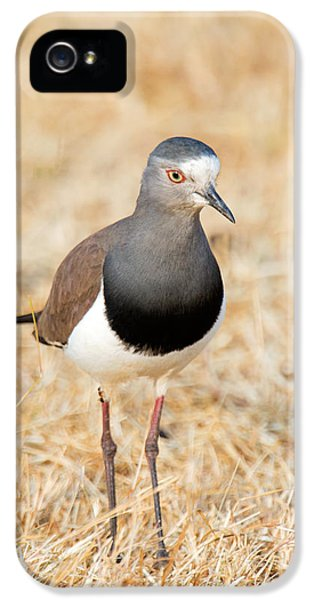 African Wattled Lapwing Vanellus IPhone 5 Case by Panoramic Images