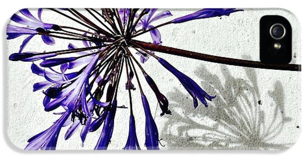 Agapanthus IPhone 5 Case