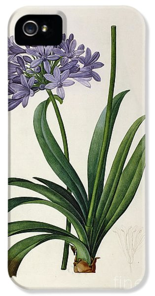Lily iPhone 5 Case - Agapanthus Umbrellatus by Pierre Redoute