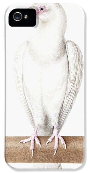 Albino Crow IPhone 5 Case by Nicolas Robert