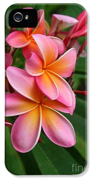 Aloha Lei Pua Melia Keanae IPhone 5 Case