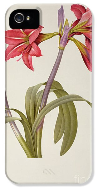 Amaryllis Brasiliensis IPhone 5 Case by Pierre Redoute