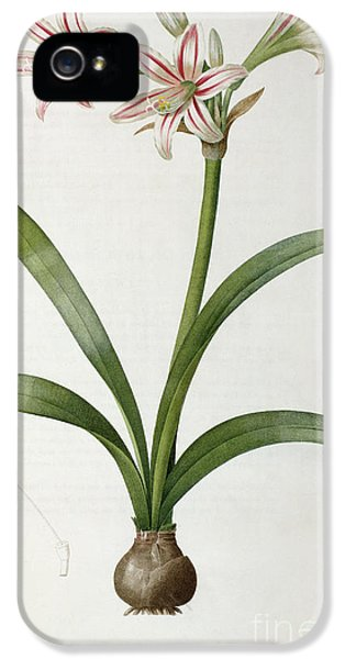 Amaryllis Vittata IPhone 5 Case by Pierre Redoute