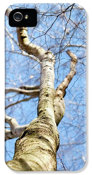 IPhone 5 Case featuring the photograph American Beech Tree by Christina Rollo