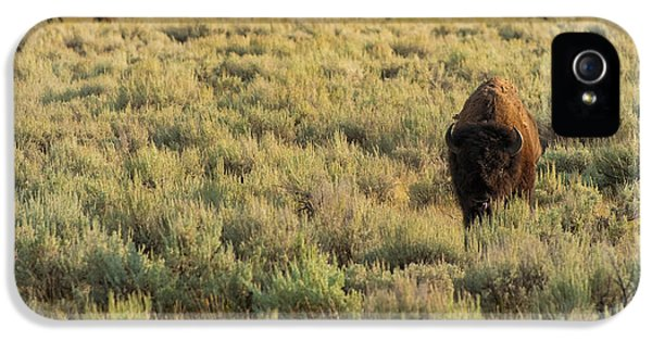 American Bison IPhone 5 / 5s Case by Sebastian Musial