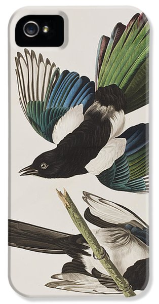 American Magpie IPhone 5 Case by John James Audubon
