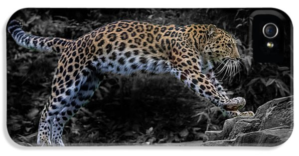 Amur Leopard On The Hunt IPhone 5 Case by Martin Newman