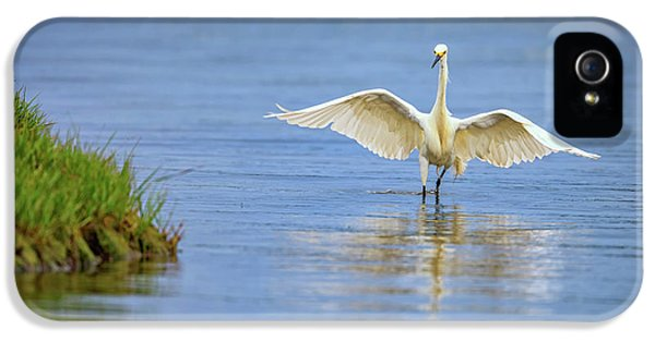 An Egret Spreads Its Wings IPhone 5 Case