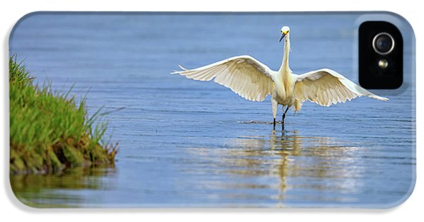 An Egret Spreads Its Wings IPhone 5 / 5s Case by Rick Berk