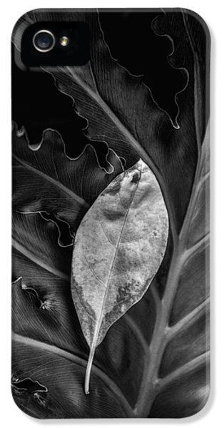And I Will Catch You If You Fall IPhone 5 Case by Tom Mc Nemar