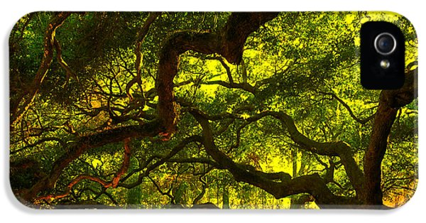 Angel Oak Limbs 2 IPhone 5 Case by Susanne Van Hulst