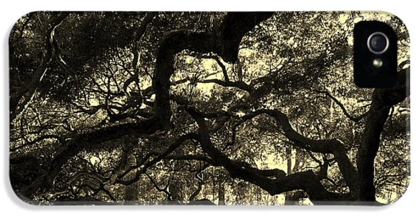 Angel Oak Limbs Sepia IPhone 5 Case by Susanne Van Hulst