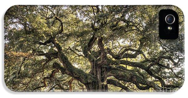 Angel Oak Tree Live Oak  IPhone 5 / 5s Case by Dustin K Ryan