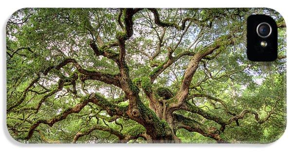 Angel Oak Tree Of Life IPhone 5 Case