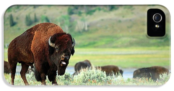 Angry Buffalo IPhone 5 Case by Todd Klassy