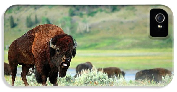 Angry Buffalo IPhone 5 Case