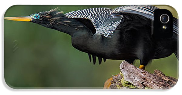 Anhinga Anhinga Anhinga, Costa Rica IPhone 5 Case by Panoramic Images