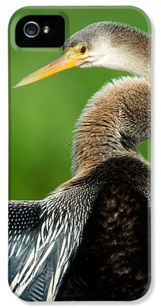 Anhinga iPhone 5 Case - Anhinga Anhinga Anhinga, Pantanal by Panoramic Images