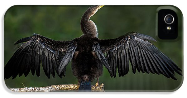Anhinga Anhinga Anhinga Perching IPhone 5 Case by Panoramic Images
