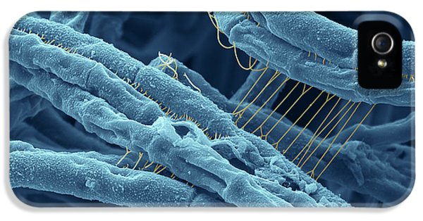 Bacterial iPhone 5 Cases - Anthrax bacteria SEM iPhone 5 Case by Eye Of Science and Photo Researchers