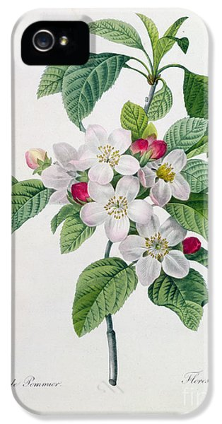 Apple Blossom IPhone 5 Case