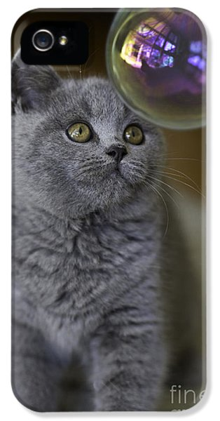 Archie With Bubble IPhone 5 Case by Avalon Fine Art Photography